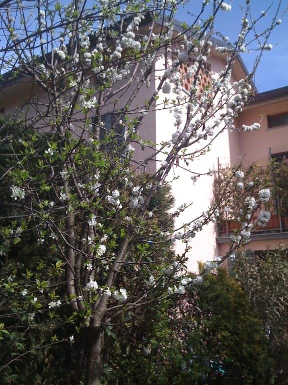 Foto 3 - Villa in Vendita - Merate (Lecco)